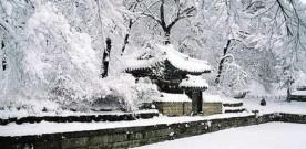 Formation hivernale au Shiatsu